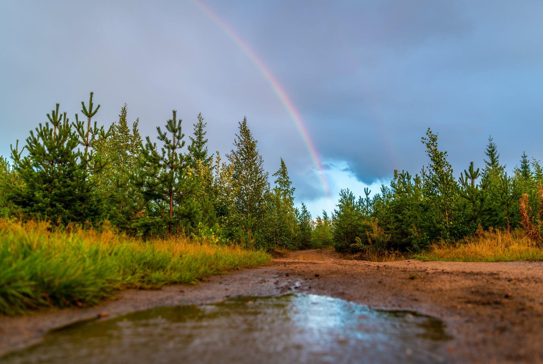green leafed trees below rainbow