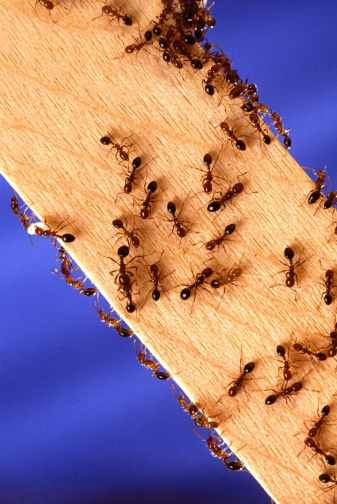 abstract ants bark bee