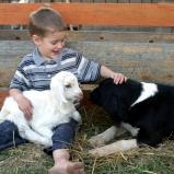 Gentle Lamb